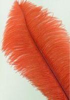 "OSTRICH FEATHERS 13"" - 17"""