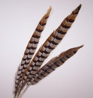 FEATHERS - PHEASANT 8 - 12""