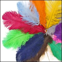 "16 - 18"" OSTRICH FEATHERS"